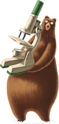 orso-ludo